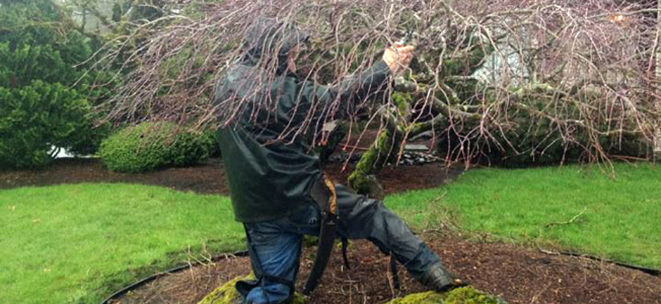 Ornamental_Pruning