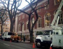 Elm Prune at the Central Library